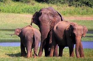 Elephant durant notre circuit reserves des Animaux durant notre voyage au Sri Lanka