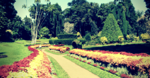 jardin botannique - kandy