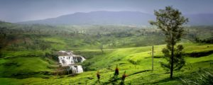 nuwara eliya plantation